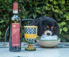 #TrovareTabarrini even on #NationalDogDay #Tabarrini #Rosso #wine #dog