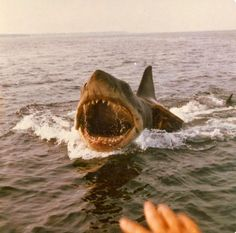 Color Photos from the Filming of Jaws on Katama Bay, Martha's Vineyard in 1974