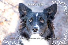 """Black List - was Hunde schon immer mal (nicht) tun sollten  Der fantastische Bud und sein Frauchen Jasmin haben zur Blogparade aufgerufen. Budhat schon den ein oder anderen Unfug betrieben und ruftzur Ideensammlung auf. Was könnte man noch anstellen?  Das Motto lautet: """"Oh du schlimmer Hund"""" - passend, oder?"""