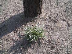 Schneeglöckchen http://www.lebensfreude-wiederfinden24.de