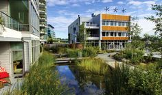 Dockside Green - Victoria BC - Naturalized Creek - Sustainable Urban Regeneration project