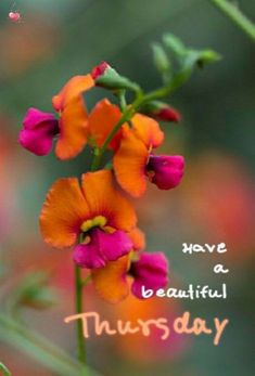 Good Morning Breakfast, Morning Love, Good Morning Greetings, Good Morning Images, Good Morning Flowers Quotes, Good Night Prayer Quotes, Valley Of Flowers, Days Of Week, Morning Messages