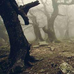 FANTASY Landscapes . the gloom of the dark realm of the Uunglarda