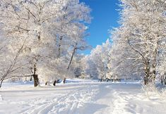 New Winter Nature Scenes Wallpaper Free - Winter Nature Scenes Wallpaper Free Elegant Winter Scenery 1 Cover Photo Free Wallpaper Backgrounds, Of Wallpaper, Nature Wallpaper, Computer Wallpaper, Iphone Wallpaper, Wallpaper Maker, Sunset Wallpaper, Scenery Wallpaper, Wallpaper Pictures