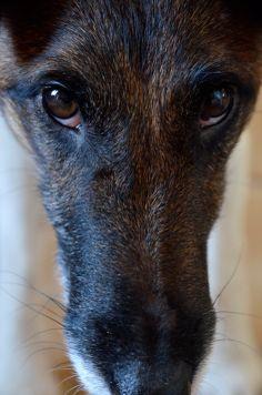 Delta, Smooth Fox Terrier. FOXaddict.com