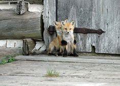 6. Un bébé cerf et un bébé renard