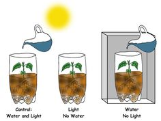 photosynthesis experiment에 대한 이미지 검색결과