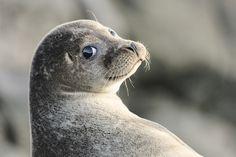 23 Breathtaking Photos Of British Wildlife - this seal has some attitude!
