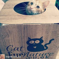 @Regrann from @kapsel_the_cat -  First minutes in my new box! @catfurnature #catfurnature #catlove #koty #kapsel #cats #catnap  #catsofinsta #catsofworld #catsoftheworld #catsofinstagram #bestmeow #bestcatsofinsta #purrfect #persiancat  #meowdel #mainecoon #tabby #turkishangoracat #gingertabby #orangecat #orangetabby #animalsaddict #instacat #instapet #instakitten #petstagram #instafollow #instamood