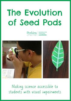 This hands-on lesson on the evolution of seed pods is accessible to students with visual impairments.