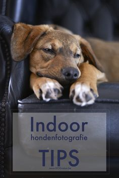 Indoor fototips | hondenfotografie DOGvision | www.DOGvision.be