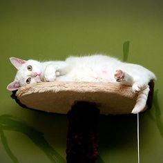 Niewiniątko  #jeszczenazielonymtle #weeklyfluff #meow #meowbox #cat #kot #caturday #angel #aniołek #niewiniątko #grzecznykotek #nadrapaku #zielonomi #sweetcat #home