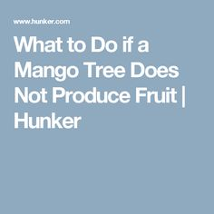 What to Do if a Mango Tree Does Not Produce Fruit | Hunker