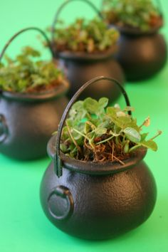 Potted Clover for St Patrick's. This could be a cute project to start much earlier with students to teach them about the life cycle of plants. Then they can take it home for March Break!