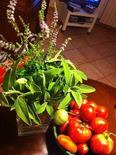 Orto47 Tempo di pomodori - 25 luglio 2011