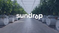 """Sundrop - Overview  Sundrop Farms Grows Tomatoes With Seawater  ShareTweetMail  Saltwater greenhousescan save the Middle East and humanity from drought and climate change. Three cheers to Sundrop Farms in Australia for pioneering saltwater greenhouses in Australia: they are now harvesting tomatoes for a leading grocery store called Coles. And Sundrop is producing what they say is a """"better product, better for the people, better for the planet –– all year round."""""""