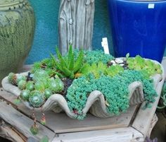 Perfect planter for succulents