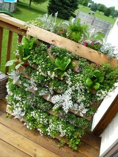 DIY Pallet Gardens - 20 Creative Ways to Use Pallets | 99 Pallets