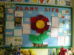 A super Plant Life classroom display photo contribution. Great ideas for your classroom! Display Boards For School, School Displays, Primary Classroom Displays, Classroom Ideas, Classroom Resources, Science Display, Plant Science, Growing Seeds, Plant Wall