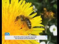 Cele două plante care te scapă de colesterol și detoxifică sângele - YouTube Healing, Cholesterol, Plant
