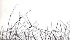 """Grass Shadows"" by Dan Potter"
