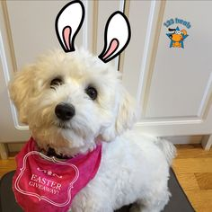 MONTHLY GIVEAWAY TIME! Tag #123treats and mention @123treats with your cute pet photo for your chance to win a great prize! This time it's Easter theme! Have fun! Must be US resident to enter.