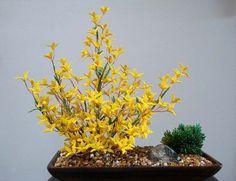 Plante perlée - jaune
