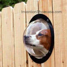 Garden Ideas For Dogs a dog friendly garden | dog care | pinterest | gardens, for dogs