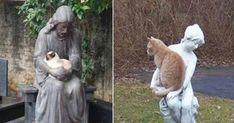 10+ cats befriending statues #cats #cattoys #catowners