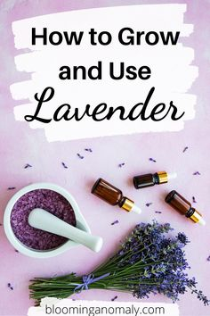 There is not a better time than now to learn how to grow lavender. You can start the plants from seed then place the herbs outdoors so they can grow in the sun. Click on the pin to learn about how to grow lavender in pots and more. #growlavender #growlavenderindoors #howtogrowlavender #growlavenderfromseed Lavender Uses, Dried Lavender Flowers, Growing Lavender, Lavender Sachets, Gardening For Beginners, Gardening Tips, Healing Herbs, Companion Planting
