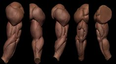 Wonderful Learn To Draw People The Female Body Ideas. Mesmerizing Learn To Draw People The Female Body Ideas. Zbrush Anatomy, Arm Anatomy, Anatomy Poses, Muscle Anatomy, Body Anatomy, Anatomy Art, Drawing Body Proportions, Arm Drawing, Human Anatomy Drawing