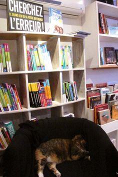 Le chat de l'Orange Bleue... Petite révision avant les concours ? C'est à l'étage à la librairie...