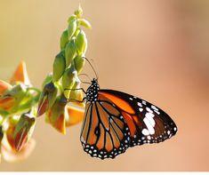 Mittwochsimpuls: Die letzten Tage konnte ich beim Spazieren die ersten Schmetterlinge entdecken. Schmetterlinge sind faszinierend und wunderschön. Ihre verschiedenen Farben und Formen machen sie einzigartig. Sie breiten ihre Flügel aus und fliegen mit einer erstaunlichen Leichtigkeit. Es ist auch sehr interessant darüber nachzudenken wie sich so ein schöner Schmetterling entwickelt. #Mittwochsimpuls #neueSchöpfung #neuerMensch #Verwandlung Community, Godly Relationship, Beautiful Butterflies, Unique