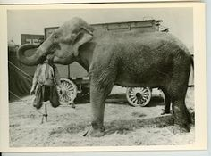 elephant eating a man Mary Ellen Mark, Old Circus, Vintage Circus, Elephant Eating, Elephant Walk, Ringling Brothers Circus, Man Beast, Funny Photos, Old Photos