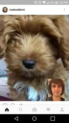 Facetime, Cool Bands, Trench, Dogs, Animals, Mariana, Animales, Animaux, Pet Dogs