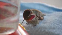 This Man Feeds A Tiny Hummingbird
