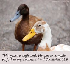 """2 Co 12:9 But He said to me, """"My grace is sufficient for you, for My power is made perfect in weakness."""" Therefore I will boast all the more gladly of my weaknesses, so that the power of Christ may rest upon me."""