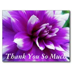 >>>Cheap Price Guarantee          Thank You Card with Dahlia Background Post Card           Thank You Card with Dahlia Background Post Card today price drop and special promotion. Get The best buyDiscount Deals          Thank You Card with Dahlia Background Post Card Review on the This webs...Cleck Hot Deals >>> http://www.zazzle.com/thank_you_card_with_dahlia_background_post_card-239913993172114019?rf=238627982471231924&zbar=1&tc=terrest