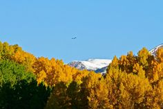 A Red-Tailed Hawk soaring above the changing aspens this morning. Gotta love this time of year.  Photo: Chris Segal