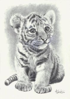 simple tiger pencil drawing - Google Search