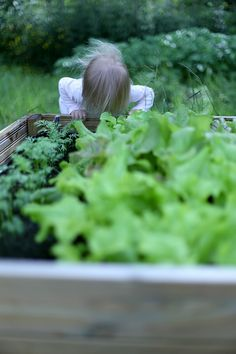 Hetkiä Maalla: OMASTA MAASTA Herbs, Garden, Garten, Herb, Gardens, Lawn And Garden, Tuin, Spice
