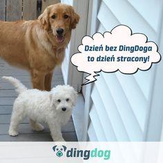 """Z """"Wielkiej Księgi Psisłów""""...  #DingDog #DogLovers #dog #pies"""