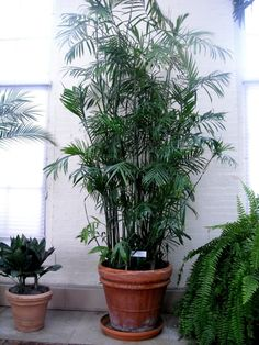 7 HousePlants That Will Purify the Air inside Your Home ... | All Women Stalk