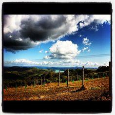 Trig Hill Vineyard, first vintage due 2016 Waiheke Island, Wineries, Auckland, New Zealand, Vineyard, Mountains, World, Travel, Outdoor