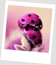 MY WORLD IS PINK!