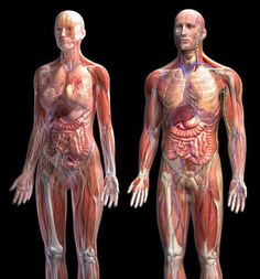 This is a great site for med students learning anatomy, Ross Med Student use it all the time to prep for the test. http://www.med.umich.edu/lrc/coursepages/m1/anatomy2010/html/courseinfo/mich_quiz_index.html