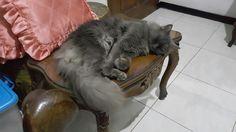 Sleeping ^^