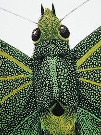 EA Seguy, a prolific artist from the 1930s, produced eleven albums of illustrations and patterns dedicated to insects. His graphic technique was achieved through hand-colouring prints through numerous plate stencils