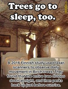 So, uh, don't wake them up or they'll be cranky in the morning.