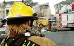 Hayvanların kanatsız melekleri itfayeciler ajanimo.com'da.. #ajanimo #ajanbrian #kedi #cat #animal #hayvan